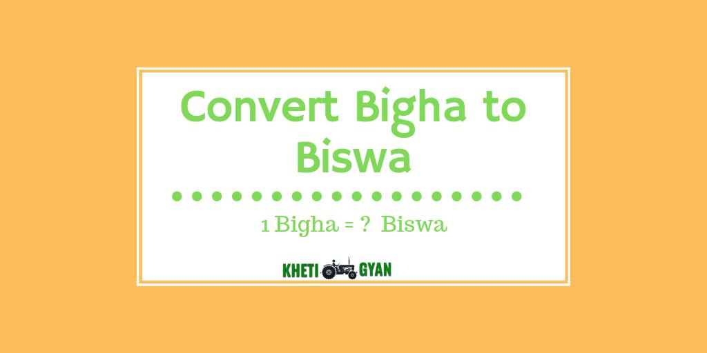 Convert bigha to biswa