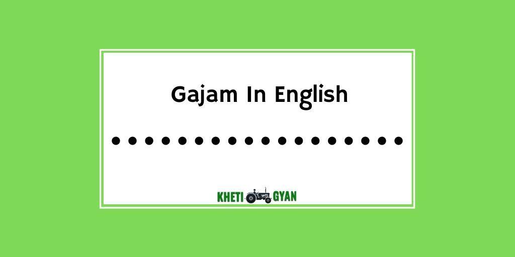 Gajam in english